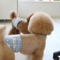 犬の皮膚トラブルの原因、実は〇〇にあった!?