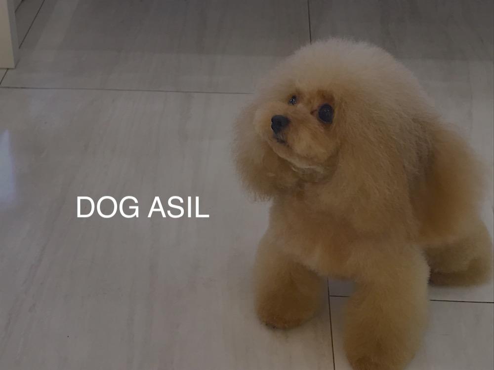 犬の体臭の原因と対策