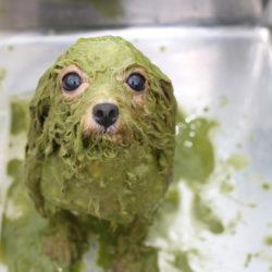 トリミングサロンが毛玉料金を取る理由と愛犬の毛玉対策