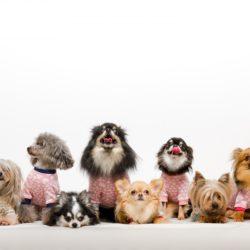 知ってた?犬の混合ワクチンの予防接種義務はある?ない!?実は勘違いしている方が多い話。