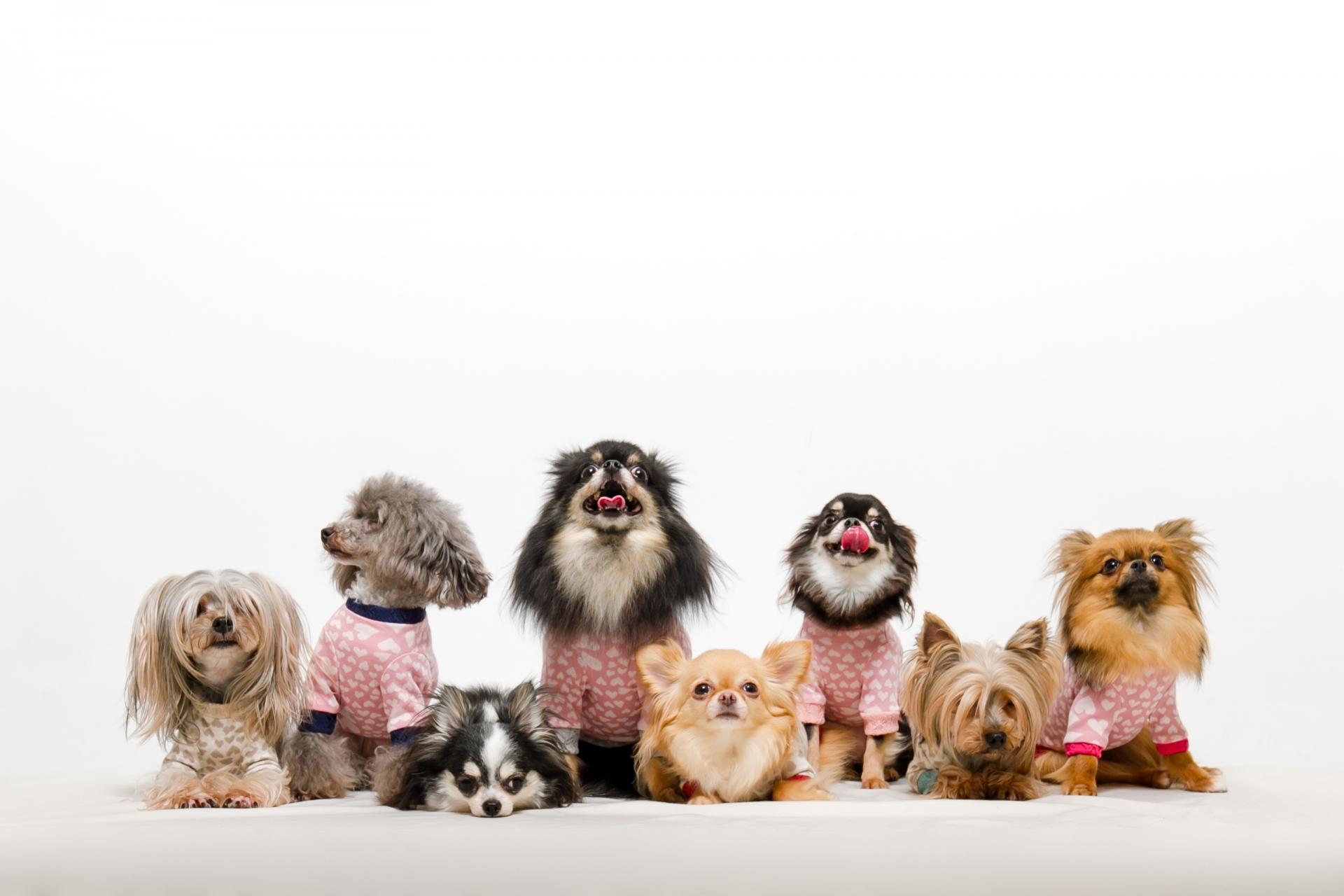 犬の予防接種は毎年義務なのか