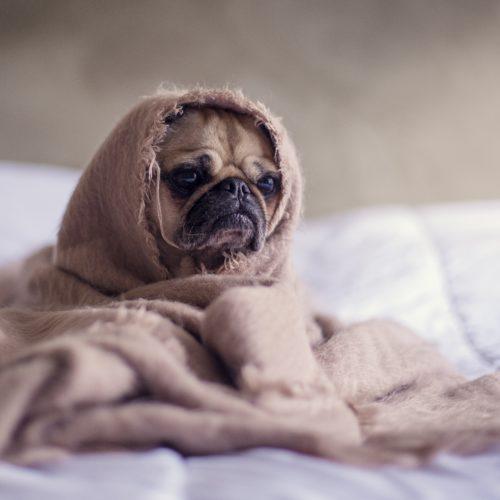 冬に気をつけたい犬のケア