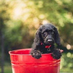 マイクロチップがあれば犬の鑑札は不要?意外と間違ってる鑑札との違い。