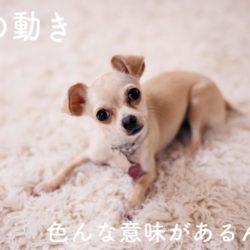 犬の耳の動きにはどんな理由があるの??