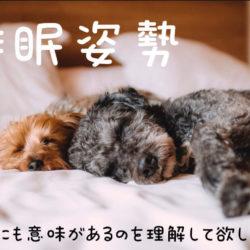 愛犬はどんな姿勢で寝てる?!寝相で分かる心理状態