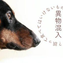犬が食べては行けな物を食べてしまったら?!
