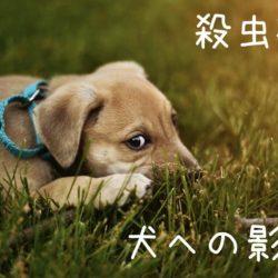 愛犬がいる部屋で殺虫剤を使用しても大丈夫!?