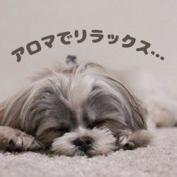 愛犬と一緒にアロマでリラックス♪