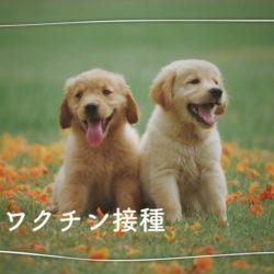 犬のワクチンは必要なの??