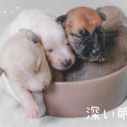 犬の睡眠運動!?どうして動くの?