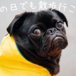 愛犬の雨の日の散歩は行かなくてはいけないの?