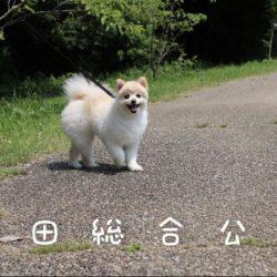 自然いっぱいの都田総合公園で愛犬のお散歩