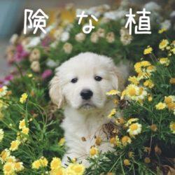 犬に危険な植物を育てていませんか?!