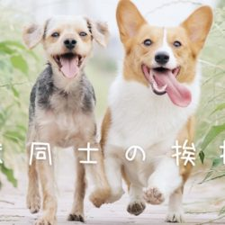 犬同士の挨拶。どう行うのが正解?