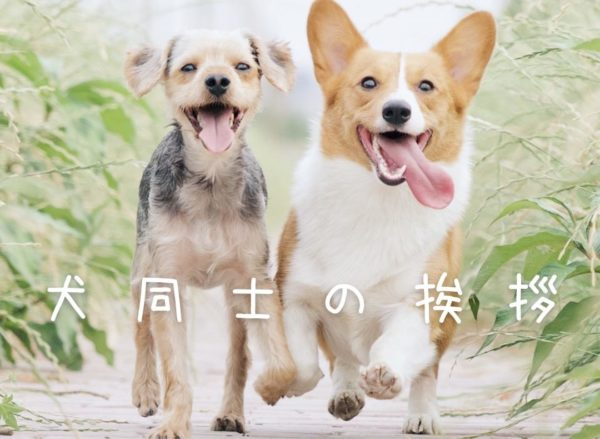 犬同士の挨拶