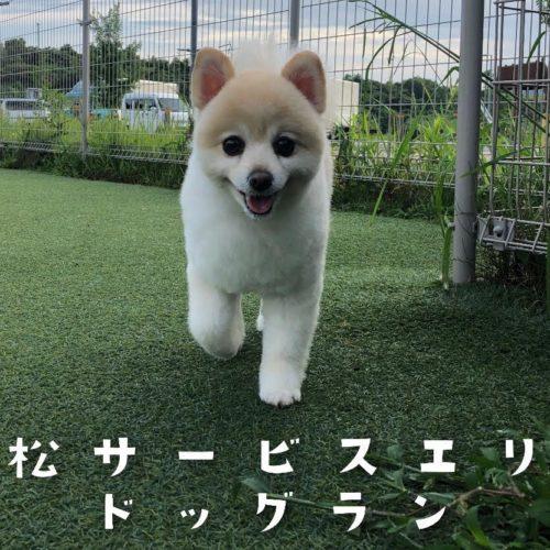 浜松SA(上り)ドッグラン
