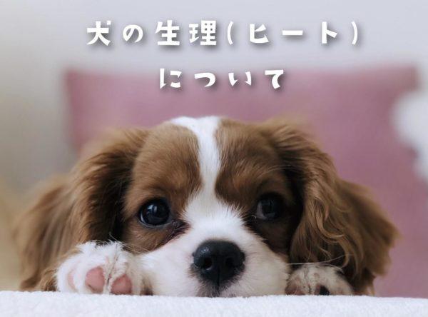 犬の生理(ヒート)について