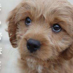 犬も膀胱炎になるの?!