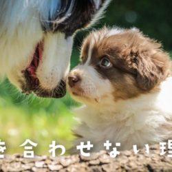犬が目を合わせない理由な何?!