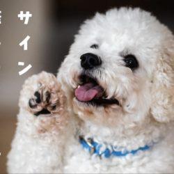 犬が撫でてほしいときのサイン