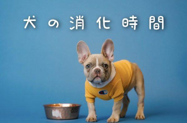 犬の消化時間