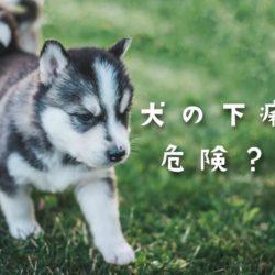 犬の下痢は危険?!病院へ行ったほうが良い下痢。
