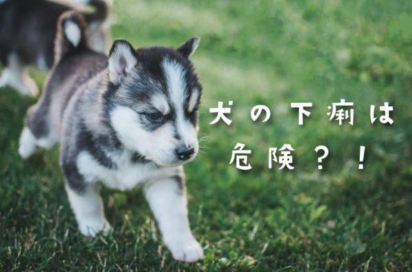 犬の下痢は危険?!
