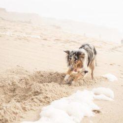 犬が掘る仕草をするのはなぜ?