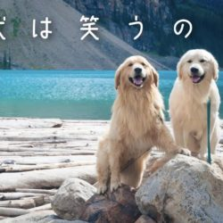 犬の笑顔に隠れた秘密?!