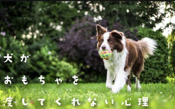 犬がおもちゃを渡さない理由