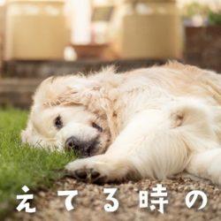 犬が甘えているときの声