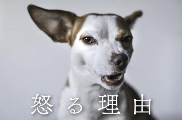 犬が怒る理由