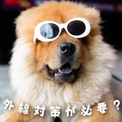 犬にも紫外線対策が必要?!