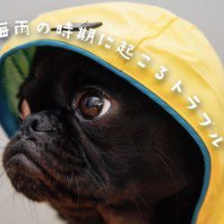 犬が梅雨の時期に起こしやすいトラブル