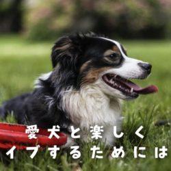 愛犬とドライブ!注意するべきこと!?
