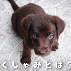 犬の逆くしゃみって何?!原因と対処法