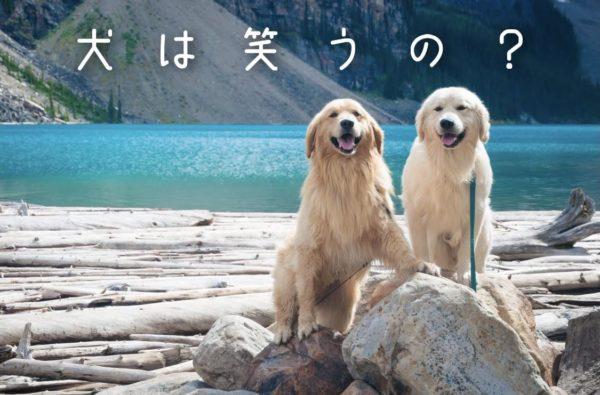 犬の笑顔について