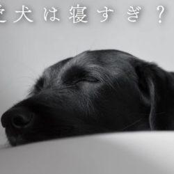 愛犬が良く寝る。寝すぎるのは何かの病気?!
