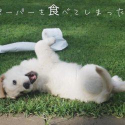 犬がペーパーを食べてしまったら?!