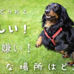 犬が撫でられて嬉しい!嫌い!な場所はどこ? |