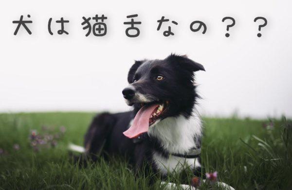 犬は猫舌なの?