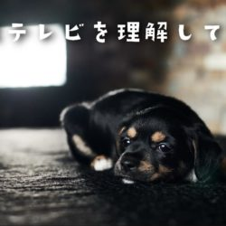 犬はテレビを見て理解しているの??