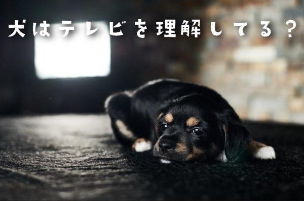 犬はテレビを理解している?