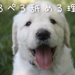 犬がぺろぺろ舐めるのはどんな理由があるの?