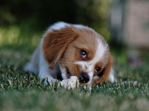 犬がぺろぺろ舐める理由