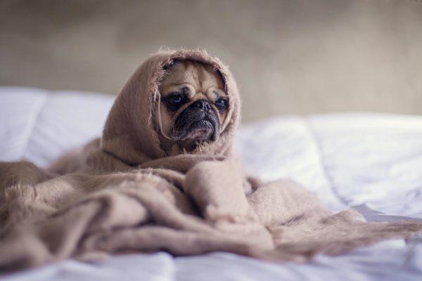 犬の肉球が冷たくなる理由
