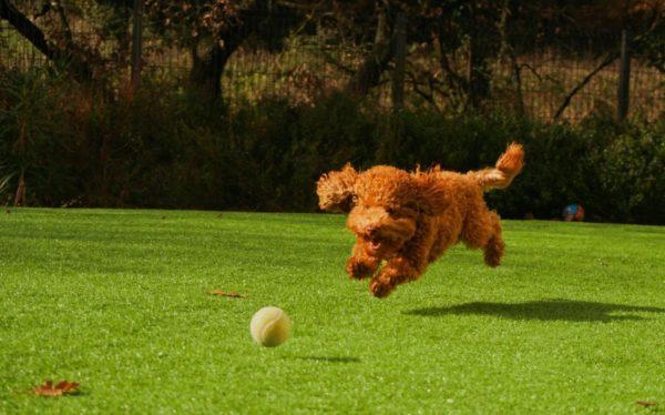 犬のジャンプは危険?!
