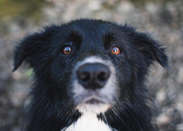 犬の目が赤い理由
