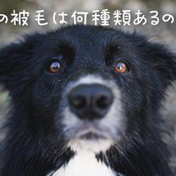 犬の被毛の違いは何?!