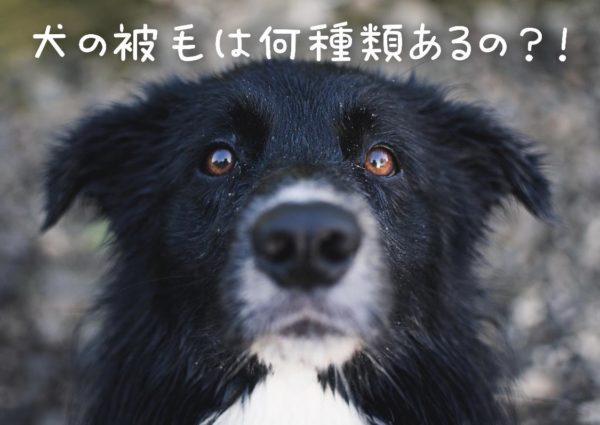 犬の被毛は何種類あるの?